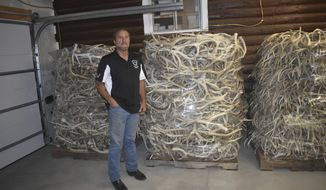 In this Sept. 27, 2018 photo Ben Barto displayes 1200 pound pallets of moose, whitetail and mule deer antlers. Barto, a Wyoming native originally from Rock Springs, has created a quiet industry along the Wind River that produces world-quality knives, ornaments, pins and just about anything else you can imagine from elk and deer antlers. (Randy Tucker/Riverton Ranger via AP)