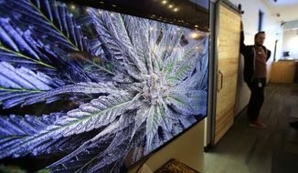 FILE -  In this Wednesday, Oct. 17, 2018 photo a cannabis plant is displayed on a screen at New England Treatment Access medical marijuana dispensary, in Northampton, Mass. New England Treatment Access, and another store in Leicester, Mass., have been given the green light to begin selling recreational pot next week, making them the first commercial pot shops in the eastern United States. (AP Photo/Steven Senne, File)