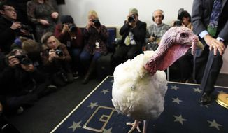 A live turkey is brought into the James S. Brady Press Briefing Room before the media at the White House, Tuesday, Nov. 20, 2018. The pardoning ceremony, to happen later, will mark its 71st year since it first took place in 1947. (AP Photo/Manuel Balce Ceneta) ** FILE **