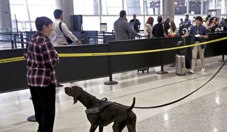 "TSA officer, Cedric Belvin, and German short-hair pointer, ""Angus,"" search departing passengers for explosives at Miami International Airport, Concourse J, South TSA checkpoint. TSA handled MIA holiday passenger traffic well by using sniffing dogs and letting everyone keep their shoes and electronic on their person on Wednesday, Nov. 21, 2018.  (Carl Juste/Miami Herald via AP) ** FILE **"