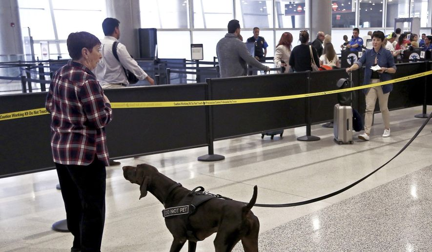 """TSA officer, Cedric Belvin, and German short-hair pointer, """"Angus,"""" search departing passengers for explosives at Miami International Airport, Concourse J, South TSA checkpoint. TSA handled MIA holiday passenger traffic well by using sniffing dogs and letting everyone keep their shoes and electronic on their person on Wednesday, Nov. 21, 2018.  (Carl Juste/Miami Herald via AP) ** FILE **"""