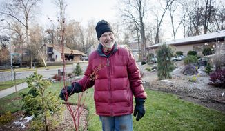 Josef Braeu stands next to a plant in his garden Thursday, Nov. 15, 2018, at his Janesville, Wis., home. Braeu is an internationally known expert on conifers and searches forests for a slow-growing mass of branches called a witch's broom, which he uses to grow dwarf conifers. (Angela Major/The Janesville Gazette via AP)
