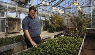 This photo taken Nov. 15, 2018, shows Horticultural Science PhD candidate Seth Wannemuehler explaining the science behind fruit breeding on the Saint Paul campus. ( Jasmin Kemp/The Minnesota Daily via AP)