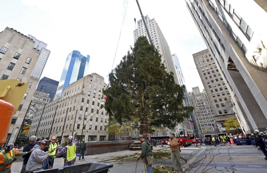 FILE - In this Nov. 10, 2018 file photo, workers raise the 2018 Rockefeller Center Christmas tree, a 72-foot tall, 12-ton Norway Spruce from Wallkill, N.Y. in New York.  A ceremony will be held on Wednesday, Nov. 28 to light the Rockefeller Center Christmas Tree. The tree will burst alive with 5 miles (8 kilometers) of LED multicolored lights and a 900-pound Swarovski crystal star during the televised extravaganza.  (Diane Bondareff/AP Images for Tishman Speyer, File)