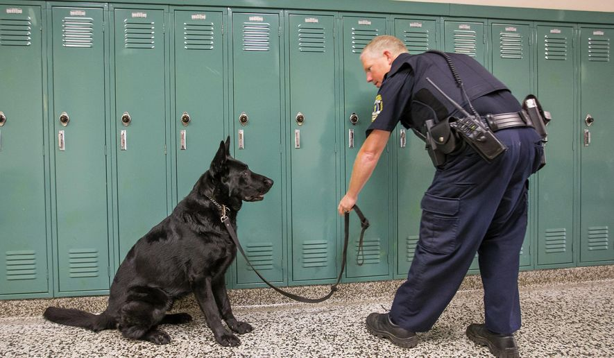 Officer Darrin Tucker works with K-9 Officer Jax Wednesday, Sept. 27, 2018 at Concord High School. Jax, a 2-year-old drug-sniffing dog, has been regularly patrolling the district's schools since August. (Michael Caterina/South Bend Tribune via AP)
