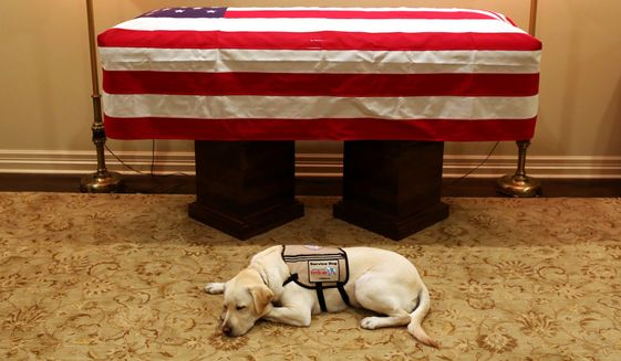 This Sunday, Dec. 2, 2018, file photo shows Sully, President George H.W. Bush's service dog, as he lies in front of his master's casket in Houston. The 41st president died Friday at his home in Houston at 94. (Evan Sisley/Office George H.W. Bush via AP)