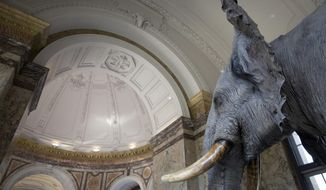 A stuffed elephant on display in the halls of the Africa Museum in Tervuren, Belgium, Thursday, July 12, 2018. The museum is reopening on Saturday Dec. 8, 2018, after more than 10 years spent revamping the building and overhauling its dated, one-sided approach to history. (AP Photo/Virginia Mayo)