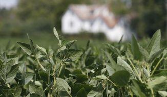 Soybean plants in fields in front of a farm house in Locust Hill, Va., Friday, Sept. 7, 2018. (AP Photo/Steve Helber)