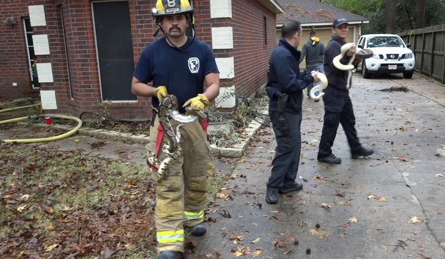 In this Dec. 8, 2018, photo provided by Scott J. Engle with Montgomery County Police Reporter shows fire department personnel carrying snakes from a house after it caught fire near Conroe, Texas. More than 100 snakes were rescued from the reptile-filled home. Authorities say a Christmas tree may have sparked the blaze. (Scott Engle/Montgomery County Police Reporter via AP)