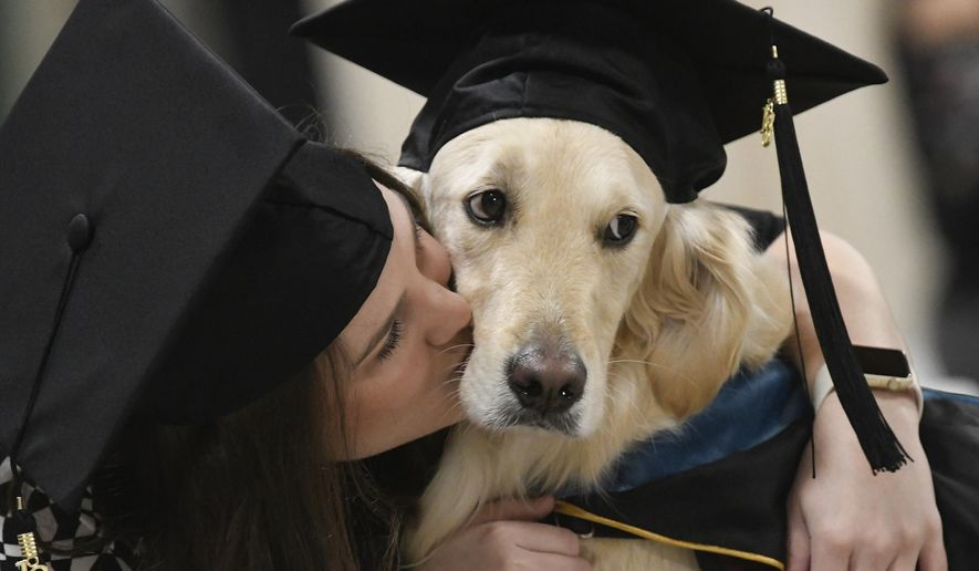 """""""Griffin"""" Hawley, the Golden Retriever service dog, is given a congratulations hug by his owner Brittany Hawley after being presented an honorary diploma by Clarkson, during the Clarkson University """"December Recognition Ceremony"""" in Potsdam, N.Y., Saturday Dec. 15, 2018. Griffin's owner, Brittany Hawley, also received a graduate degree in Occupational Therapy. Both attended 100% of their classes together. (AP Photo/Steve Jacobs)"""