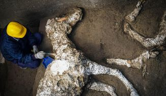 An archaeologist inspects the remains of a horse skeleton in the Pompeii archaeological site, Italy, Sunday, Dec. 23, 2018. A tall horse, well-groomed with the saddle and the richly decorated bronze trimmings, believed to have belonged to an high rank military magistrate has been recently discovered, Professor Massimo Osanna, director of the Pompeii archeological site said to the Italian news agency ANSA. (Cesare Abbate/ANSA Via AP)