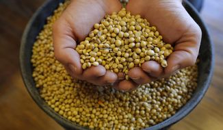 FILE - In this Nov. 21, 2018, file photo, Justin Roth holds a handful of soybeans at the Brooklyn Elevator in Brooklyn, Iowa. The U.S. Department of Agriculture says it must delay the release of key crop reports due to the partial government shutdown. The announcement Friday, Jan. 4, 2019 left investors and farmers without vital information during an already tumultuous time for agricultural markets. The USDA planned to release the reports Jan. 11 but said that even if the shutdown ended immediately, the agency wouldn't have time to release the reports as scheduled. (AP Photo/Charlie Neibergall, File)