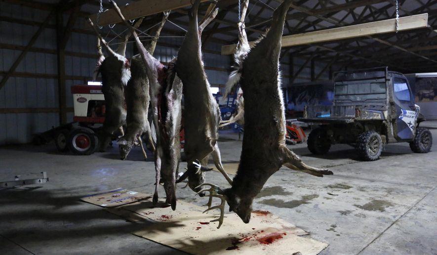 In this Sunday, Dec. 2, 2018, photo, deer carcasses the hunting group shot hang in Dennis Hefel's garage in Sherrill, Iowa. (Eileen Meslar/Telegraph Herald via AP)