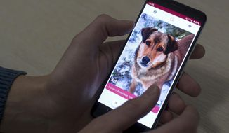 In this photo taken on Thursday, Jan. 31, 2019, A man looks at a mobile phone app that helps people find dogs in animal shelters in Vilnius, Lithuania. A group of enthusiasts have launched the app that helps match aspiring dog owners with stray dogs. (AP Photo/Mindaugas Kulbis)