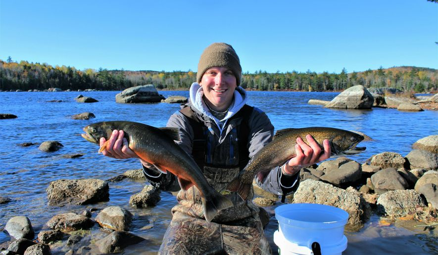 In this Oct. 26, 2018 photo, University of Maine graduate student Brad Erdman holds an Artic charr, left, and a brook trout, right, at Floods Pond near Otis, Maine. Scientists in Maine are in the middle of a project to use DNA to help preserve Arctic charr, which are at the southern end of their range in the state. (Mitch Paisker via AP)