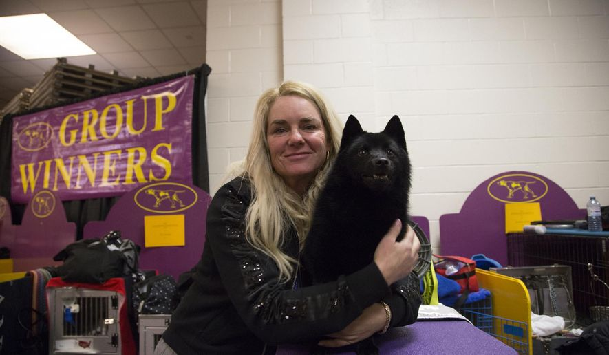 Colton the Schipperke poses with his handler Christa Cook backstage at Madison Square Garden during the Westminster Kennel Club Dog Show in New York, Tuesday, Feb. 12, 2019. A day after winning the nonsporting group and a place in the final ring of seven, Colton was ruled ineligible for best in show. (AP Photo/Nat Castaneda)