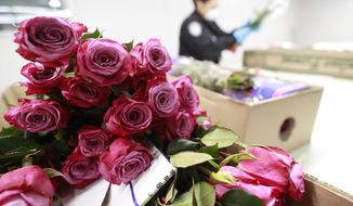 In this, Tuesday, Feb. 5, 2019 photo, U.S. Customs and Border Protection agricultural specialists inspect flowers at Miami International Airport in Miami. Inspecting flowers for pests that could threaten U.S. crops is an essential government service that kept pace with the pre-Valentine's rush despite the five-week government shutdown. (AP Photo/Wilfredo Lee)