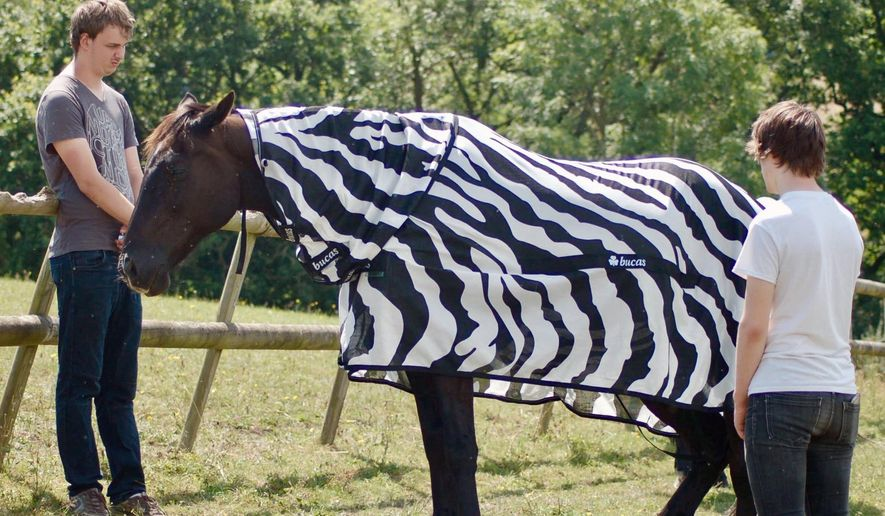 In this undated photo issued by University of Bristol, England, showing a horse wearing a zebra striped coat.  Scientists from the University of Bristol and the University of California at Davis, dressed horses in black-and-white Zebra type striped coats for part of their research, offering evidence that zebra stripes provide protection from blood-sucking insects that spread diseases. (University of Bristol and University of California at Davis via AP)