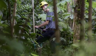 In this Feb. 13, 2019 photo, project technician Robert Tunison, who spends between 30 minutes to an hour per leaf, collects plant physiology data inside the El Yunque tropical rainforest, in Rio Grande, Puerto Rico. In this corner of northeast Puerto Rico, U.S. scientists are trying to figure out how Earth might recover from extreme weather events amid increasingly warmer temperatures. (AP Photo/Carlos Giusti)