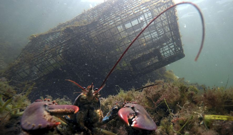 FILE-In this Sept. 3, 2018 file photo, a lobster walks on the ocean floor near a lobster trap off Biddeford, Maine. Maine officials say lobstermen brought more than 119 million pounds (54 million kilograms) of the state's signature seafood ashore in 2018, with the second-highest value on record. (AP Photo/Robert F. Bukaty, File