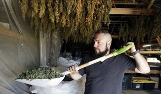 FILE- In this April 23, 2018 file photo, Trevor Eubanks, plant manager for Big Top Farms, shovels dried hemp as branches hang drying in barn rafters overhead at their production facility near Sisters, Ore. The Idaho State Police may get funds to purchase equipment that would allow investigators to distinguish hemp from marijuana. Hemp, a cousin of marijuana, has a very low concentration of the psychoactive substance called THC that gives marijuana its high-inducing properties. (AP Photo/Don Ryan)