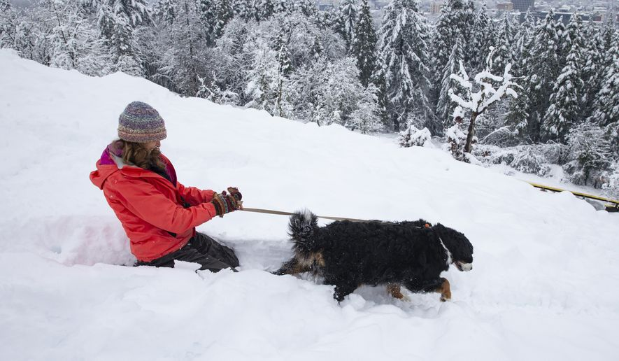 Missoula the dog, right, drags owner Susan Flynn down the side of Skinner Butte overlooking Eugene, Ore., Wednesday Feb. 27, 2019, after a second snow storm passed through the Willamette Valley. (Chris Pietsch/The Register-Guard via AP)