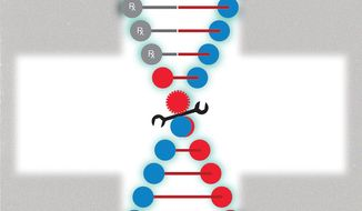 Illustration on the challenges of gene therapy by Linas Garsys/The Washington Times