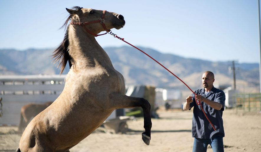 """This image released by Focus Features shows Matthias Schoenaerts in a scene from """"The Mustang."""" (Tara Violet Niami/Focus Features via AP)"""