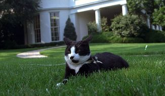 ** FILE ** In this Aug. 26, 1994 file photo, first cat Socks rests in the grass outside the Oval Office of the White House in Washington. Two famous figures in the Bill Clinton White House, his personal secretary and ailing pet cat, Socks _ are back in the public eye. Clinton secretary Betty Currie is working for John D. Podesta, co-chairman of President-elect Barack Obamaís transition, at the same time reports surfaced that her adopted pet Socks, now 19, has cancer.  (AP Photo/Marcy Nighswander, File)