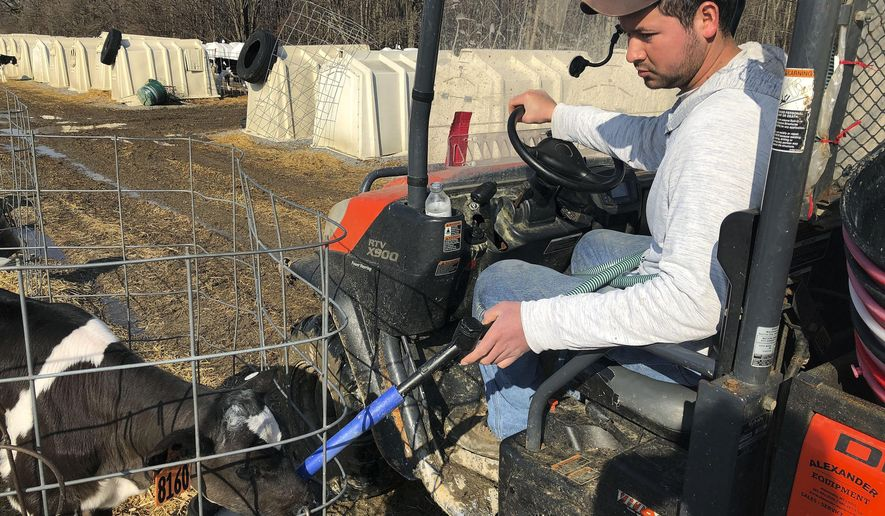 In this Wednesday, March 20, 2019 photo, Ismael Castellanos feeds calves on a the dairy farm where he works, in Bethany, New York . A renewed push around the country to let immigrants here illegally get driver's licenses resonates on the farms and orchards of upstate New York. Castellanos says he feels isolated and that trips to town to buy groceries can cost $40. (AP Photo/ Michael Hill)