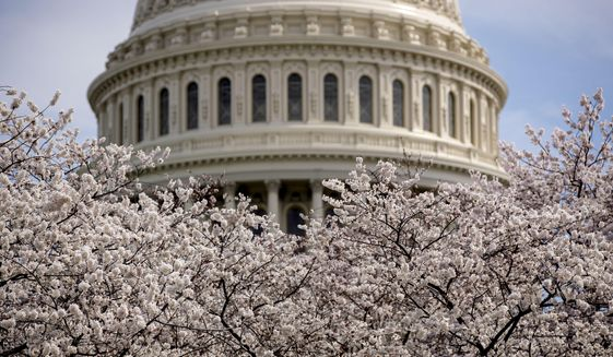 In this March 30, 2019, file photo the Dome of the U.S. Capitol Building is visible as cherry blossom trees bloom on the West Lawn in Washington. (AP Photo/Andrew Harnik, File) **FILE**