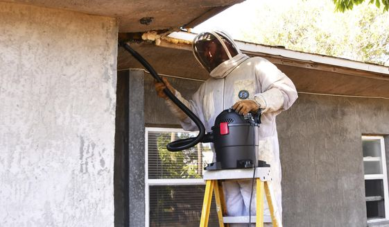 In this April 16, 2019 photo, Leo Cross with Florida Wildlife Trappers, removes bees outside a house in Cocoa Beach, Fla.. He had removed a hive of bees a week ago, but many bees returned to the area inside the homeowner's roof so had to return a week later to remove the rest of them. (Malcolm Denemark/Florida Today via AP)