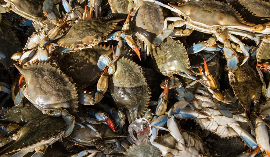 Survey shows ongoing rebound for Chesapeake's blue crabs