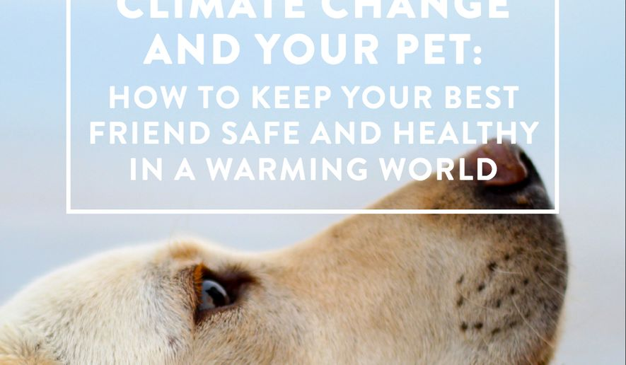The Climate Reality Project, a group founded by Al Gore, has just issued a 20-page guide to help pet owners protect their dogs and cats from climate change. (Climate Reality Project)