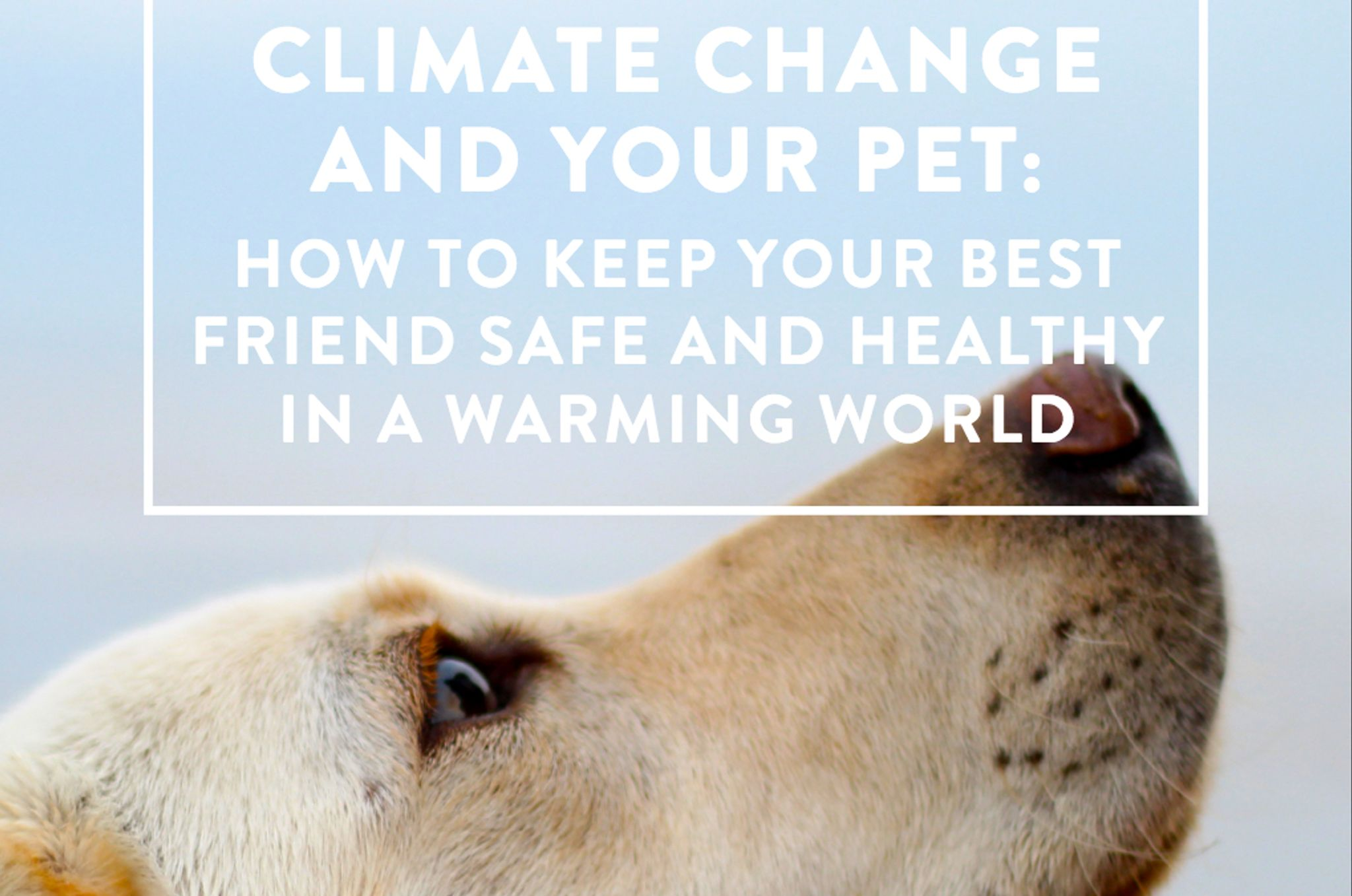 Al Gore's climate group warns that pets are now threatened by gl