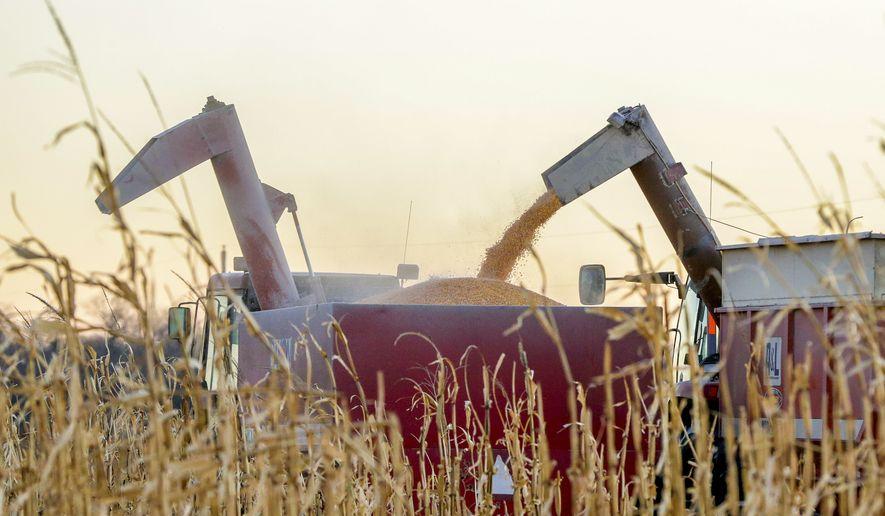 An auger delivers corn seed onto a wagon near Schyler, Neb., Thursday, Nov. 30, 2017. (Associated Press)