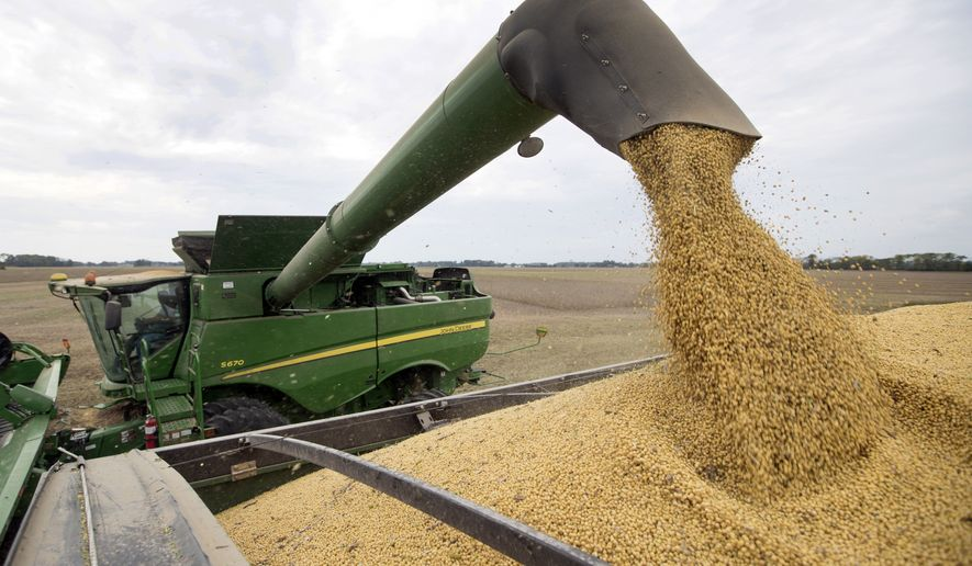 "FILE - In this Sept. 21, 2018, file photo, Mike Starkey offloads soybeans from his combine as he harvests his crops in Brownsburg, Ind. The escalating trade war between the U.S. and China is causing anxiety among rural farmers and bankers. Upper Midwest soybean farmer Jamie Beyer says these are days of ""a little bit of panic."" Minnesota agriculture lender Kent Thiesse says most farmers were able to get financing for spring planting, but more federal aid might be needed to head off ""serious losses"" this fall. (AP Photo/Michael Conroy, File)"