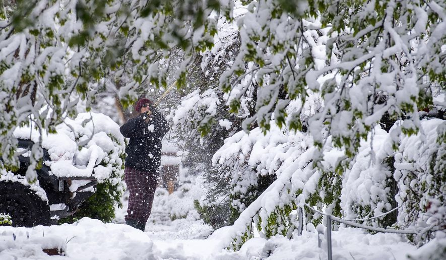 Jennifer Saultz sweeps the snow off her bushes outside her home on E. Willamette Avuene in Colorado Springs, Colo., Tuesday, May 21, 2019, after a spring snow storm left up to 19 inches of wet snow in parts of El Paso County. (Christian Murdock/The Gazette via AP)