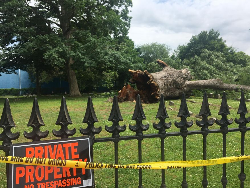 This Friday, June 7, 2019 photo shows a nearly-600 year-old oak tree which toppled on Thursday in Salem, N.J. It is believed Quaker John Fenwick, who brought the first English settlement to West Jersey in 1675, brokered a treaty with a Native American tribe under the tree's branches. (Carly Wanna/The Philadelphia Inquirer via AP)