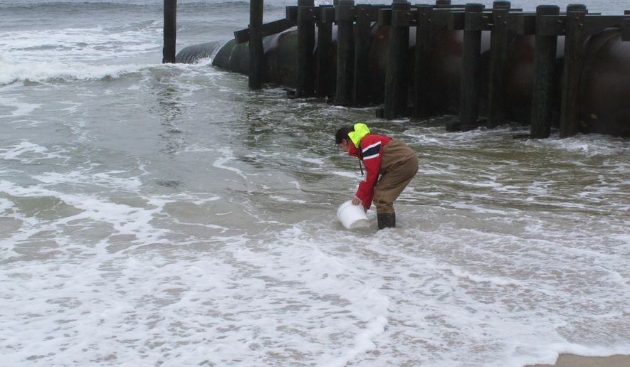 This May 30, 2019 photo shows Skye Post, who will be a junior at Monmouth University this fall, taking an ocean water sample near a storm drain outfall pipe on the beach in Long Branch, N.J. University researchers are studying the relationship between heavy rainfall and elevated levels of bacteria from animal waste that gets flushed into storm sewers and out in the ocean at popular surfing beaches at the Jersey shore.(AP Photo/Wayne Parry)