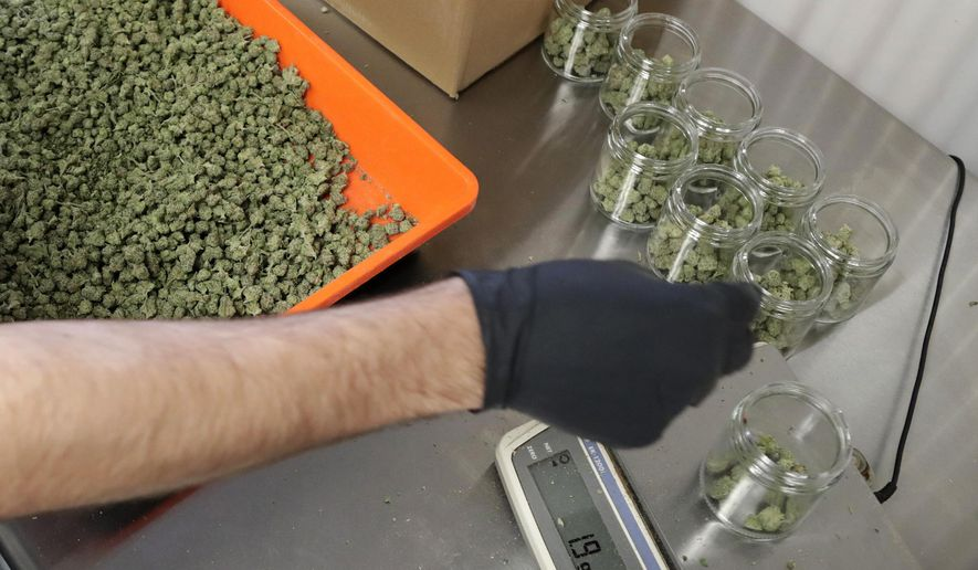FILE - In this Friday, March 22, 2019 file photo, an employee at a medical marijuana dispensary in Egg Harbor Township, N.J., sorts buds into prescription bottles. At the end of 2018, about 1.4 million Americans are actively using marijuana to treat to treat anxiety, sleep apnea, cancer and other conditions, according to an Associated Press analysis of states that track medical marijuana patients. (AP Photo/Julio Cortez, File)