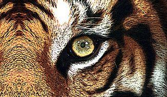 Tiger Eye Illustration by Greg Groesch/The Washington Times