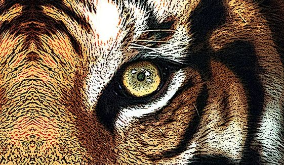 Tiger Eye Illustration by Greg Groesch/The Washington Times