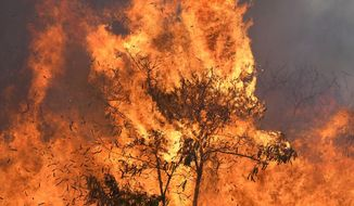 An out of control wildfire that began along a major Central Maui highway burns Thursday July 11, 2019, in Maui, Hawaii. Hawaii emergency officials ordered an evacuation on Maui due to the runaway brush fire. (Matthew Thayer/The News via AP)