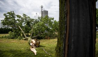 Strong winds snapped a large tree from its trunk on School Street in Frankenmuth, Mich., Sunday, July 21, 2019. Crews are continuing around-the-clock efforts to restore electrical service after severe storms over two days knocked out power for over 800,000 Michigan homes and businesses. (Kaytie Boomer/Bay City Times via AP)