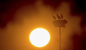 Storks stand in their nest as the sun rises in Lebus, eastern Germany,Friday, July 26, 2019.  (Patrick Pleul/dpa via AP)