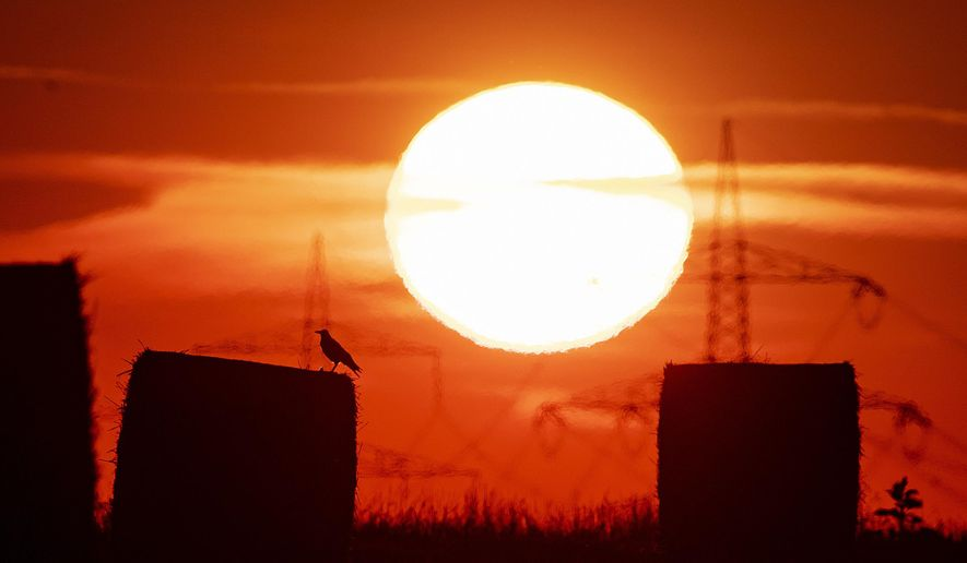 In this file photo dated Thursday, July 25, 2019, a bird sits on a straw bale on a field in Frankfurt, Germany, as the sun rises during an ongoing heatwave in Europe. The U.S. National Oceanic and Atmospheric Administration said Thursday, Aug. 15, 2019, that July was the hottest month measured on Earth since records began in 1880. (AP Photo/Michael Probst, FILE)