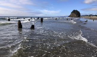"""In this Thursday, Aug. 1, 2019, photo, evidence of a Cascadia earthquake's awesome destructive power is visible at the beach in Neskowin, Ore. A """"ghost forest"""" of Sitka spruces juts up from the beach in the tiny town. The trees were likely buried by tsunami debris 2,000 years earlier, and partially uncovered by storms in 1997. (AP Photo/Andrew Selsky)"""