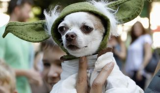 "A dog dressed as Yoda from ""Star Wars"" won the cosplay costume contest award at Doggy Con in Woodruff Park, Saturday, Aug. 17, 2019, in Atlanta. Cosplay is the practice of dressing up like a fictional character. (AP Photo/Andrea Smith)"