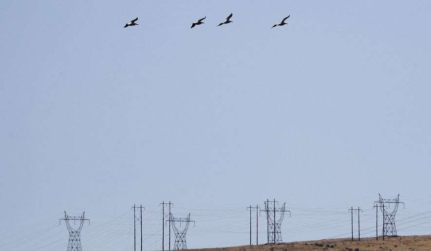 In this Wednesday, Aug. 14, 2019 photo, white pelicans take flight over power lines near the Hanford Reach National Monument near Richland, Wash. A handful of sites where the United States manufactured and tested some of the most lethal weapons known to humankind are now peaceful havens for wildlife, where animals and habitats flourished on obsolete nuclear or chemical weapons complexes because the sites banned the public and most other intrusions for decades. But Hanford, where the cleanup has already cost at least $48 billion and hundreds of billions more are projected, may be the most troubled refuge of all. (AP Photo/Elaine Thompson)